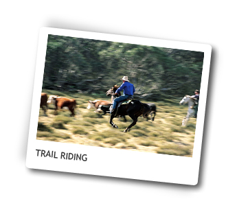 High Country Horse Riding, Victoria