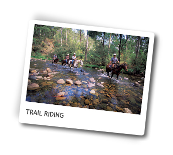 Luxury Horse Ride Tours, Victoria